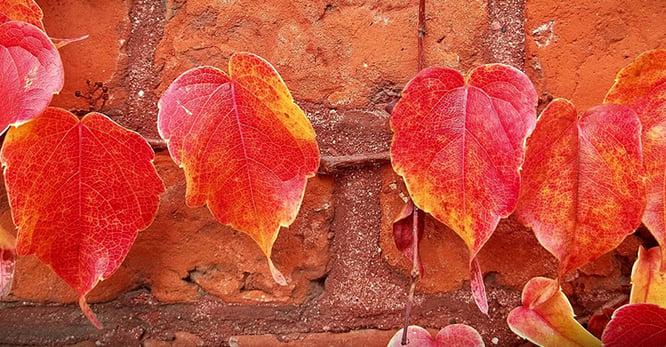 Your Fall Preventative Maintenance Checklist